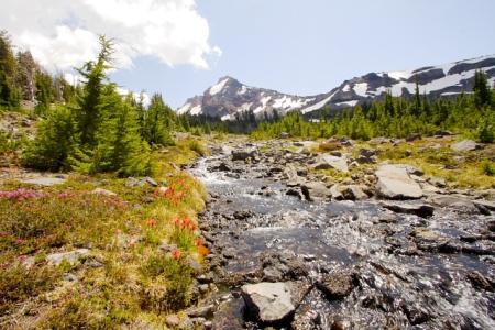 Upper Gold Creek Wild Flowers & Broken Top